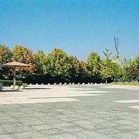 いこいの森広場写真
